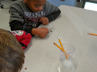STEM science experiments- Mexican Jumping Bean investigations