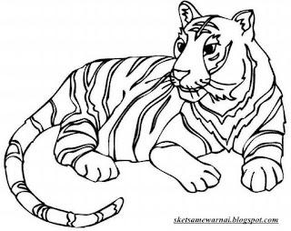 Gambar Mewarnai Hewan Harimau Gambar Mewarnai