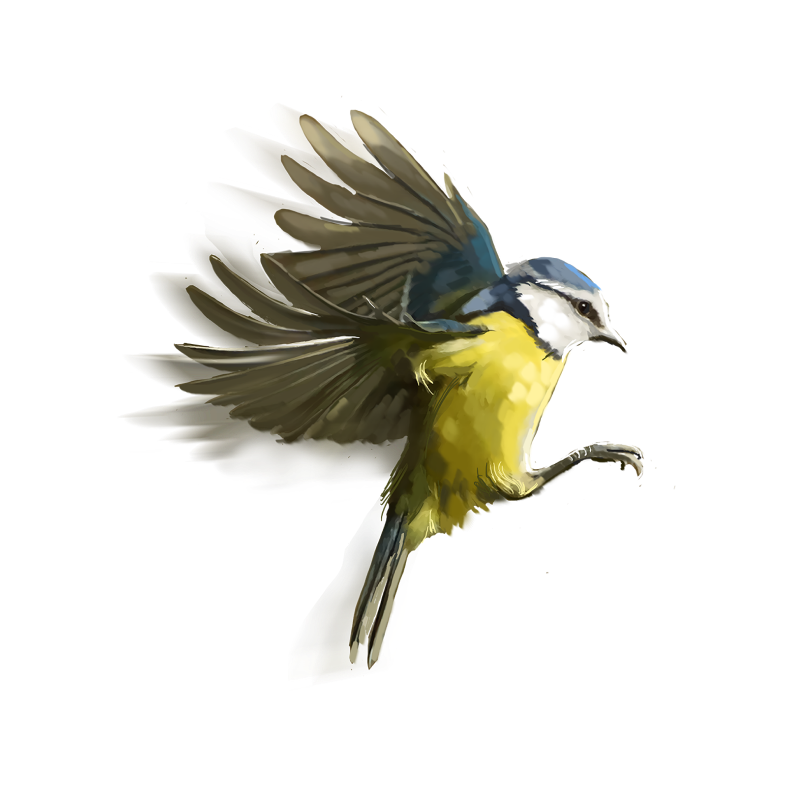 Awesome Editing Zone: Png bird For picsart editing