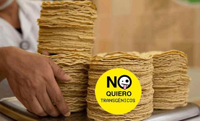 90.4% de las tortillas que consumen los mexicanos son transgénicas