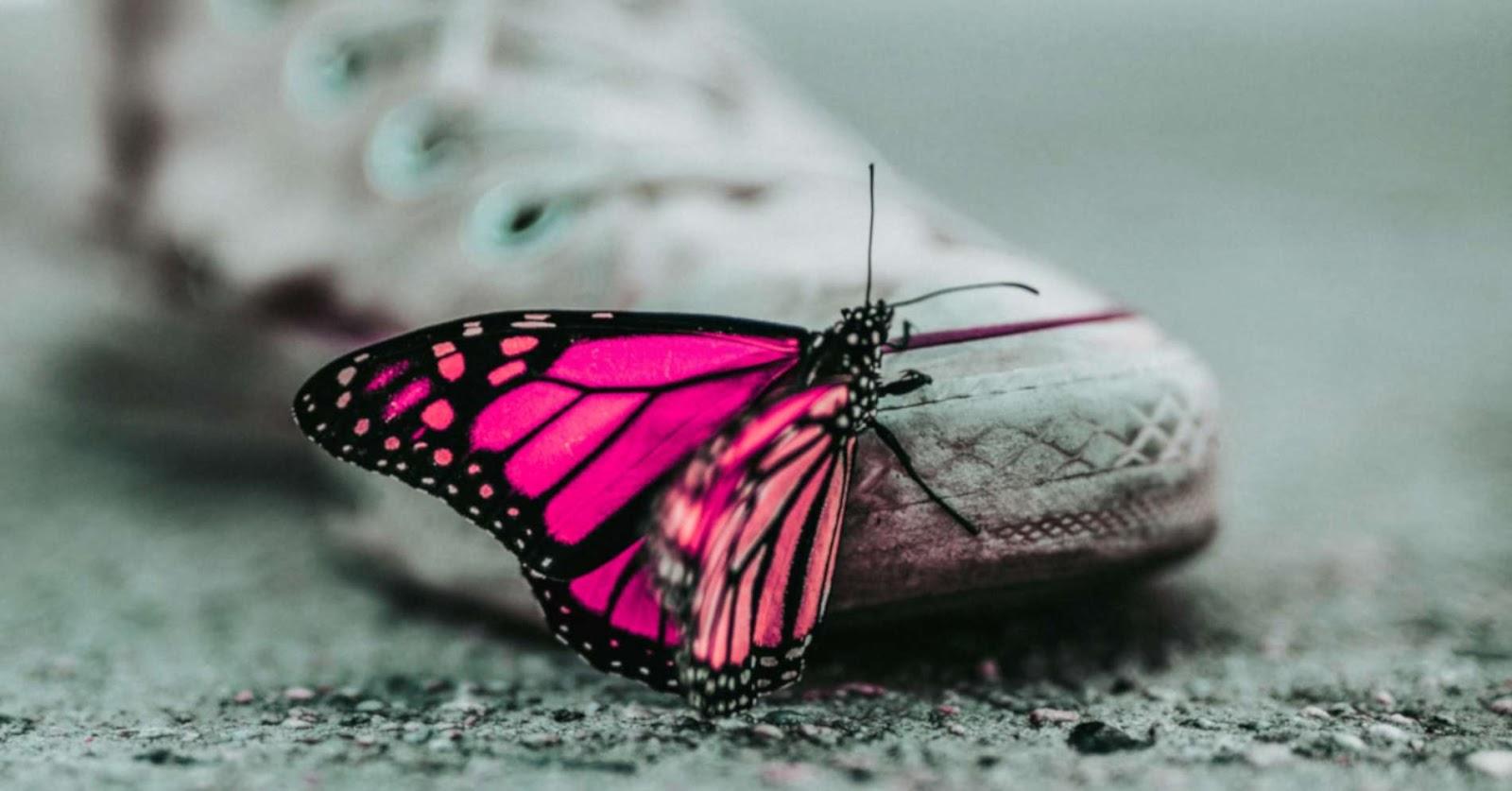Mejora tu Vida: WINGWAVE Coaching Breve