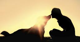 ¿Qué significa soñar con mascotas?