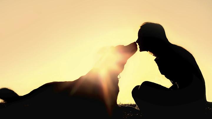 Soñar con mascotas