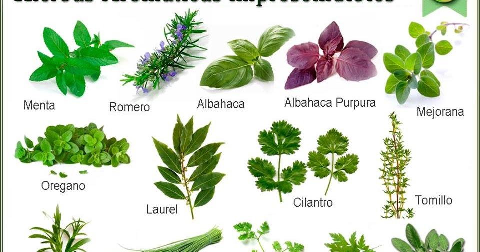 Cultos religiosos populares la nfinda parte 2 for Planta decorativa con propiedades medicinales crucigrama