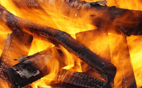 Oak tree seasoned firewood does not spread Bretziella fagacearum