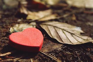 corazon rojo y hojas secas