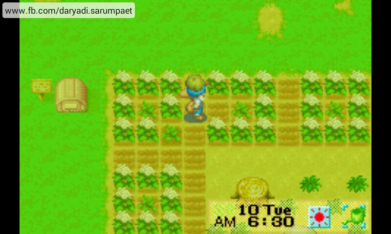 Harvest Moon Game Hp For Android Games - tradersxsonar