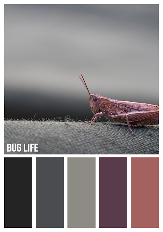 Gold On The Ceiling: Bug life