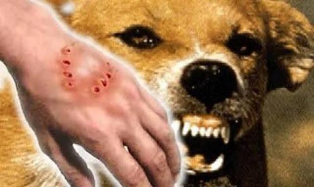 Waspada Rabies! 32 Orang Sudah Jadi Korban, Segera Vaksin Hewan Peliharaan Anda