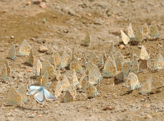 mariposas en bebedero