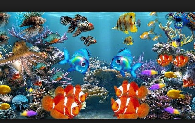 harga ikan hias air tawar