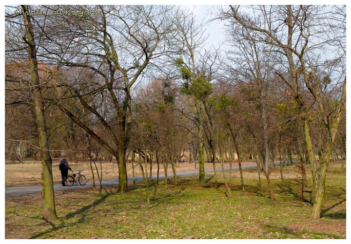 rowerzysta w parku, wiosna w parku, drzewa park wiosna