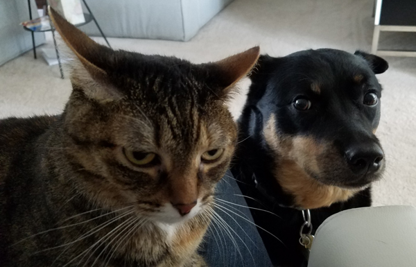 image of Sophie the Torbie Cat sitting on my lap and Zelda the Black and Tan Mutt sitting at my knee, while I'm sitting at my desk