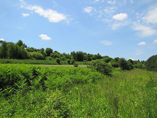 Łąki i pola przy roztoczańskim szlaku krawędziowym.