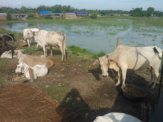 flood-control-after-normal-rain-bihar