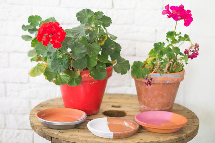 Color para nuestras plantas diy