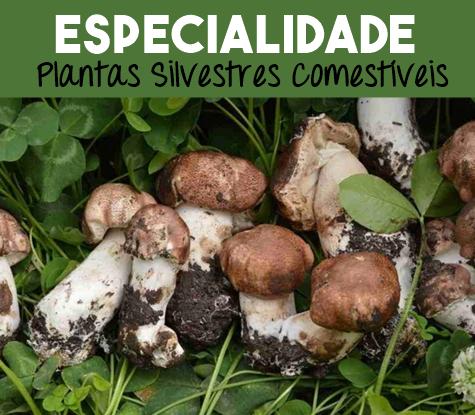 Plantas Silvestres Comestíveis Respondida