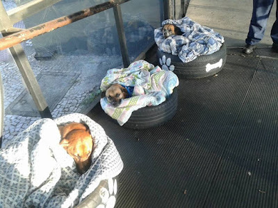 http://www.ntd.tv/inspiring/pets/bus-station-helps-stray-dogs-escape-freezing-winter-providing-shelter-warm-bed-food.html