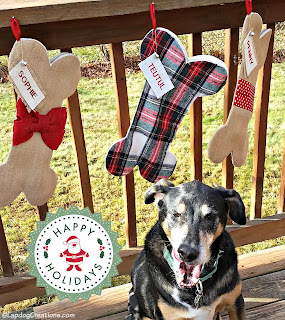 senior mixed breed dog yawning christmas stocking