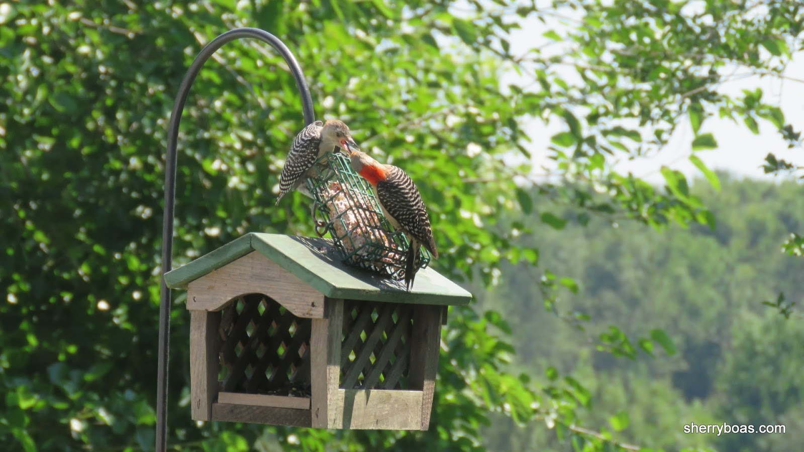 simply living birds fight over in demand house