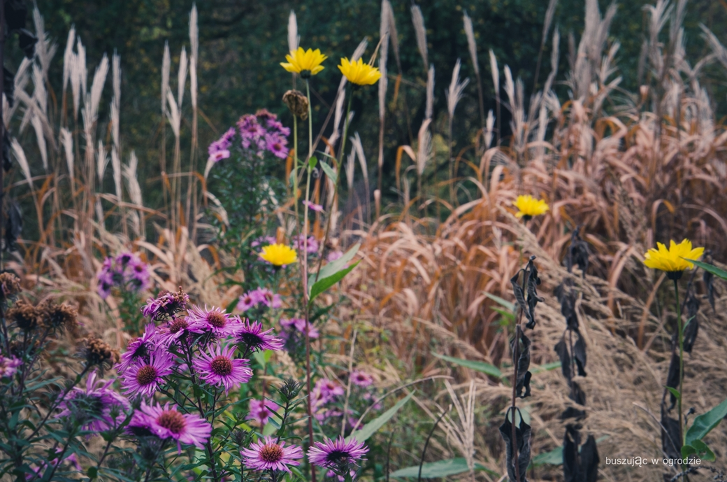 jesienne kwiaty, jesienny ogród