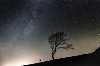 Homme et arbre devant le ciel étoilé