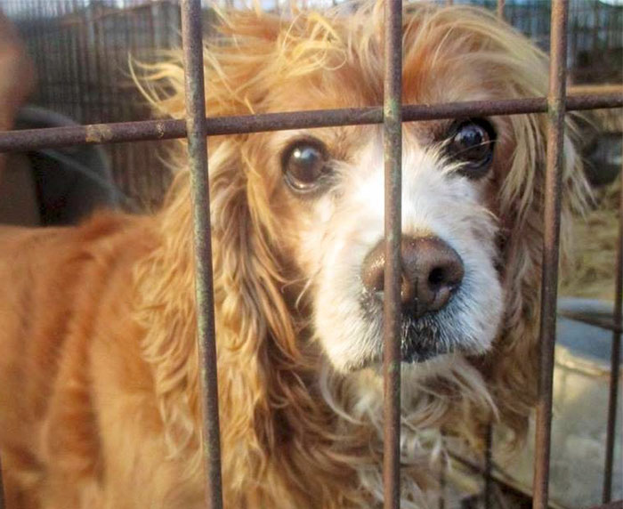 Νότια Κορέα κακοποίηση σκύλων