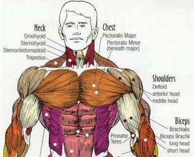 Ways To Build Muscle Fast Naturally