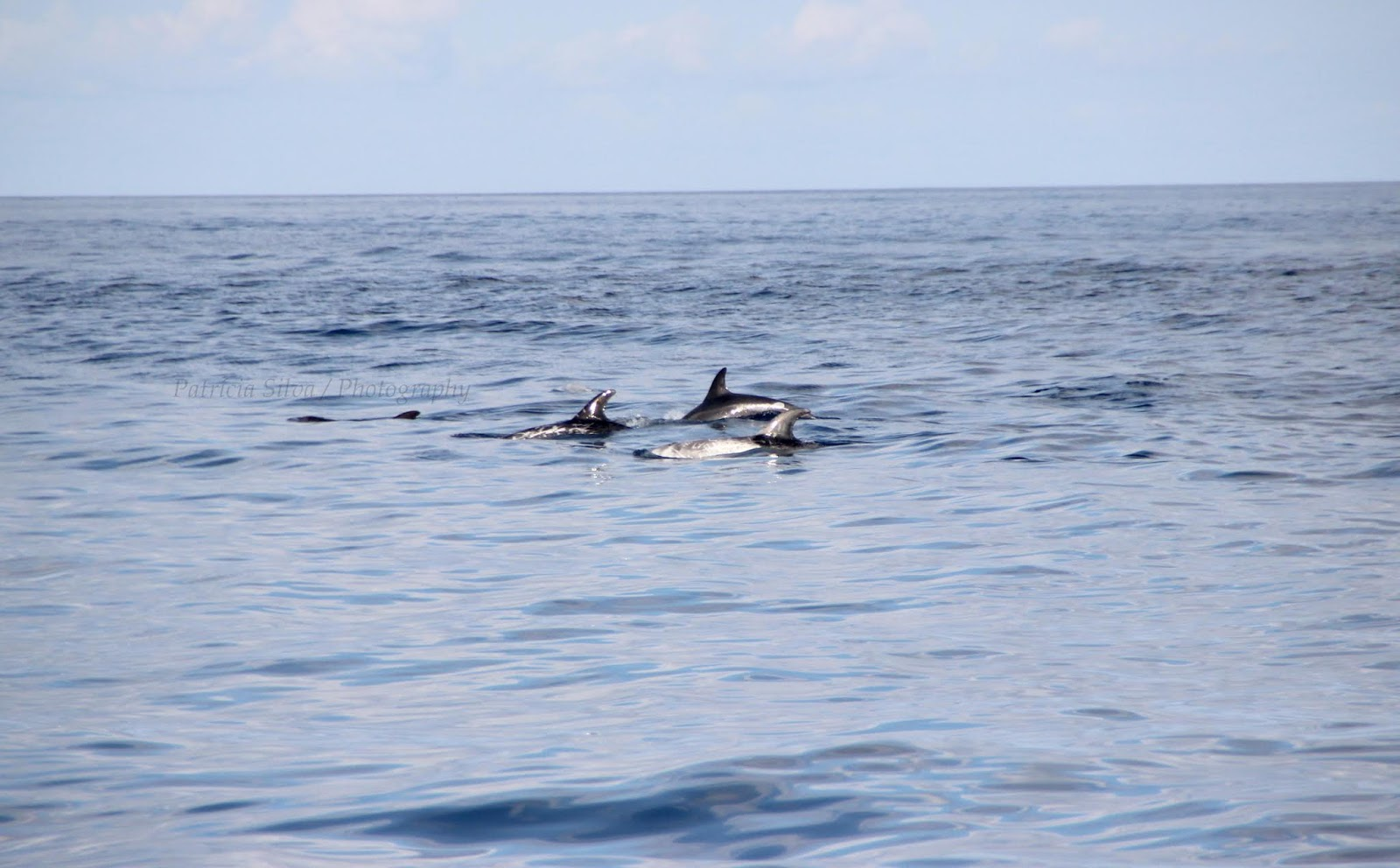 three dolphin together, they are in fewer groups