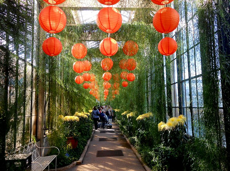 My Virtual Garden 2 Chrysanthemum Festival Iii