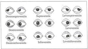 dibujo de diferentes tipos de mirada