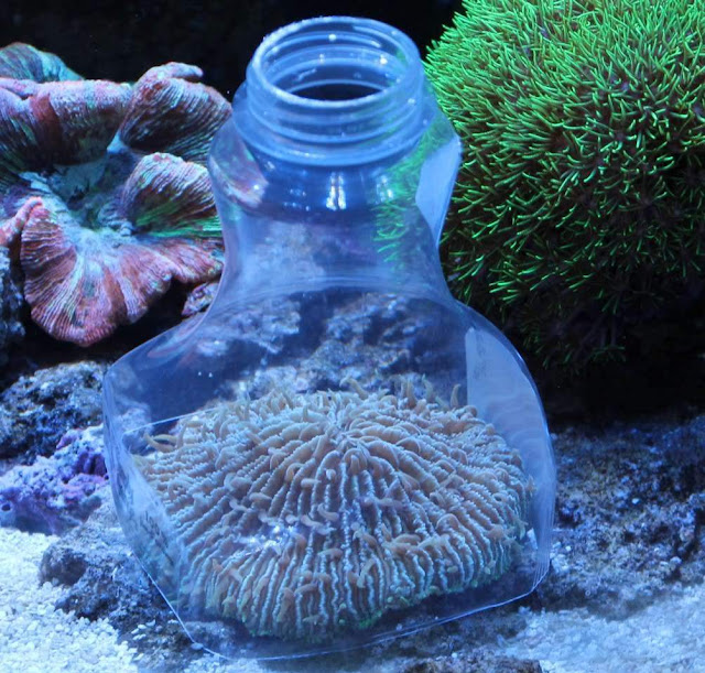 Corals Eat Plastic Because They Like the Taste
