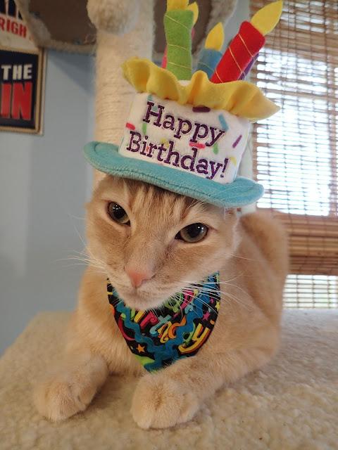 And I Got To Wear Dis Pawsome Birthday Hat Celebrate