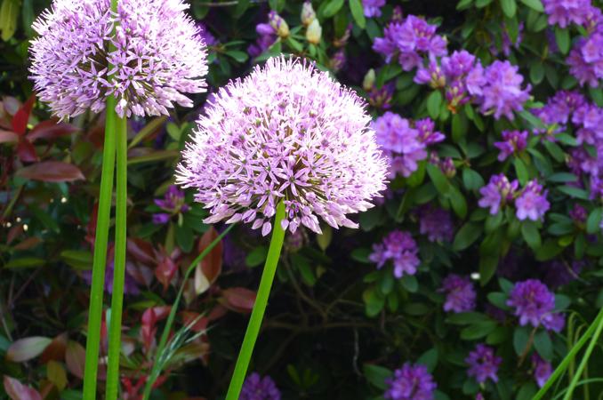 Bluhende Blumen Mai Juni Hylen Maddawards Com