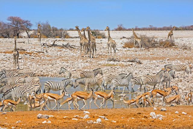 Etosha National Park,Namibia
