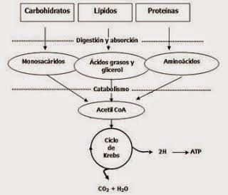6 Técnicas no tradicionales Metabolismo que podrían estar en contraste con cualquiera que haya visto Es bueno