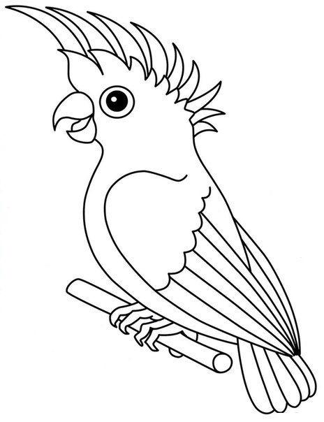 Tranh tô màu con Vẹt