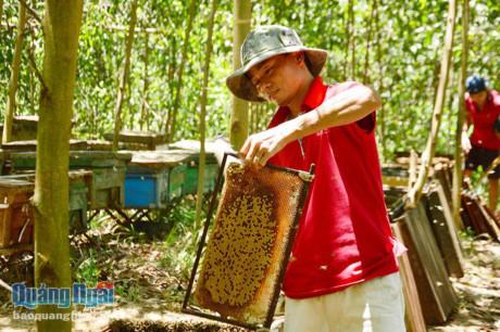 Quảng Ngãi Bác tin đồn đàn ong bu dồn lại khiến lúa lép hạt
