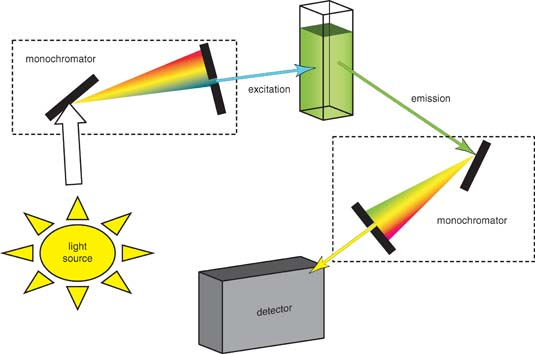 Molecular structure and spectroscopy by g aruldhas