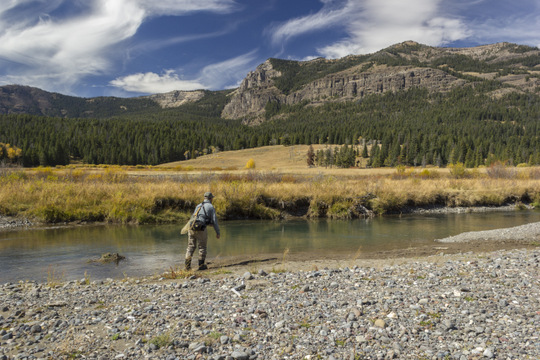 An angler fishes a pool on Soda Butte Creek