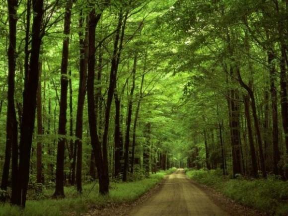 A Magyar Közlönyben megjelent hosszú távú koncepció megszabja az ország területének egy ötödével való gazdálkodás irányait 2030-ig, és választ keres az erdőkkel kapcsolatos kihívásokra.
