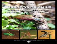 insectos-de-chile-con-problemas-de-conservacion