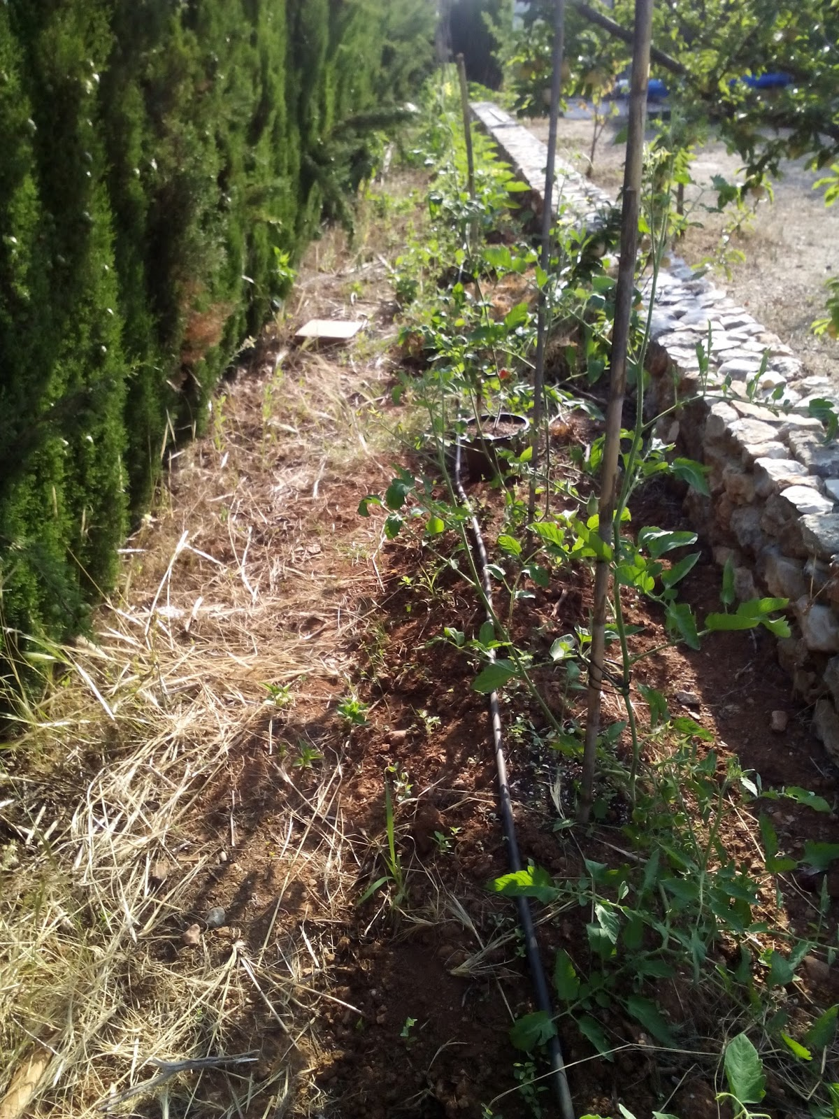 Cultivar el huerto casero for Plantas beneficiosas para el huerto