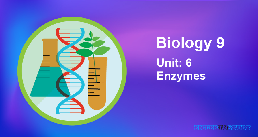 KIPS 9th Class Biology Notes Unit 6: Enzymes
