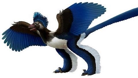 Xiaotingia Dinozoru Resmi