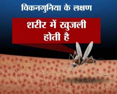 Chikungunya Faelane Vale Macchr Ka Naam