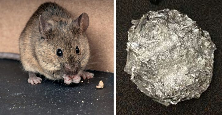 The Right Tip To Baking Soda To Prevent Mice And Rats From Entering Your Home