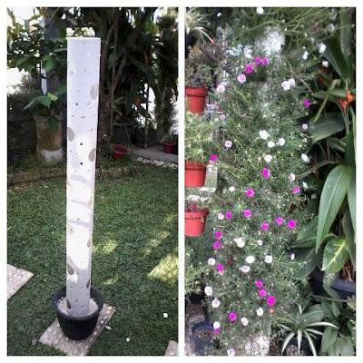 Menara Bunga Krokot (Rumah Bunga Neisha)