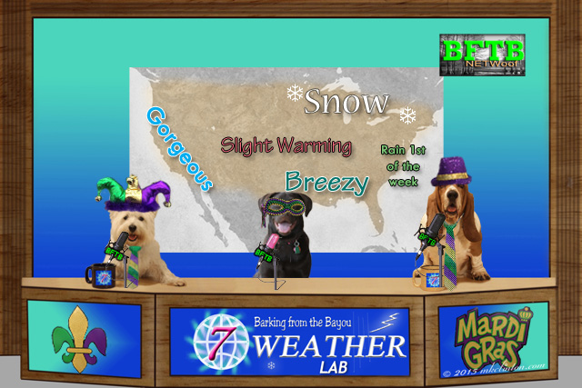 BFTB NETWoof weather desk with three dogs in Mardi Gras costumes and weather map