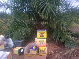 pupuk nasa untuk sawit, pupuk kelapa sawit, pupuk sawit organik, jual pupuk sawit, harga pupuk sawit